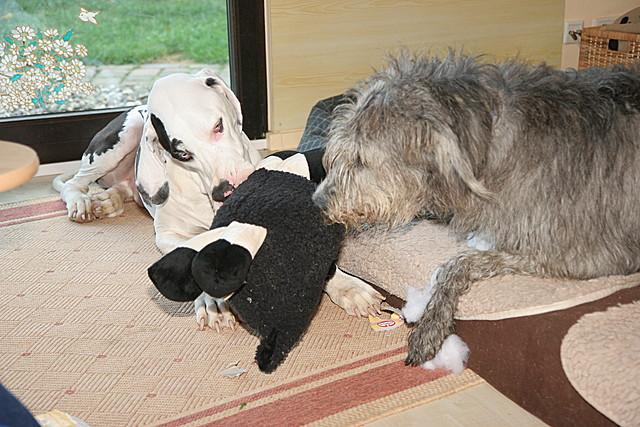 das Aldi Schaf