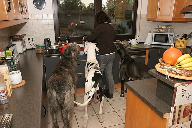 Frauchen in der Küche