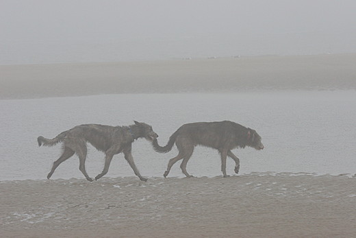 Annie und Timo im Nebel