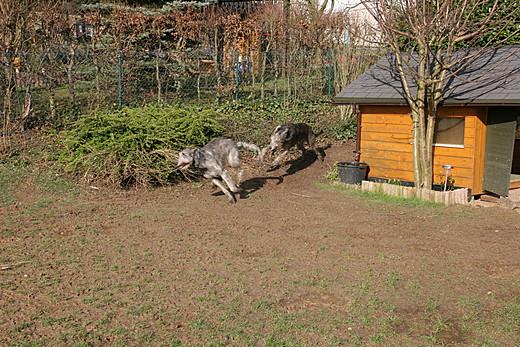 Rund um die Hütte (2)