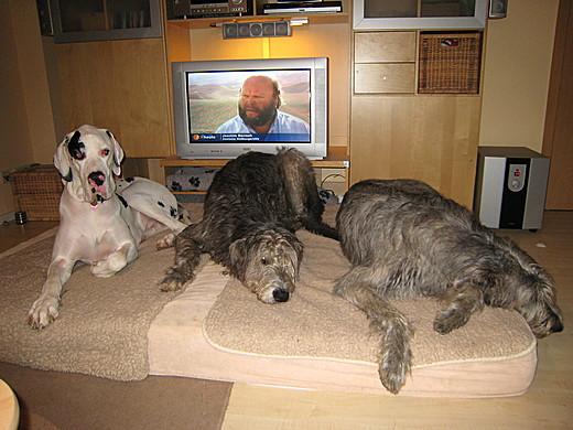 Alle drei auf der Matratze